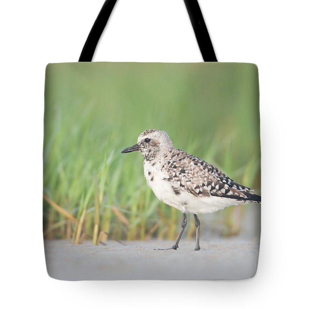 Clarence Holmes Tote Bag featuring the photograph Black-bellied Plover I by Clarence Holmes