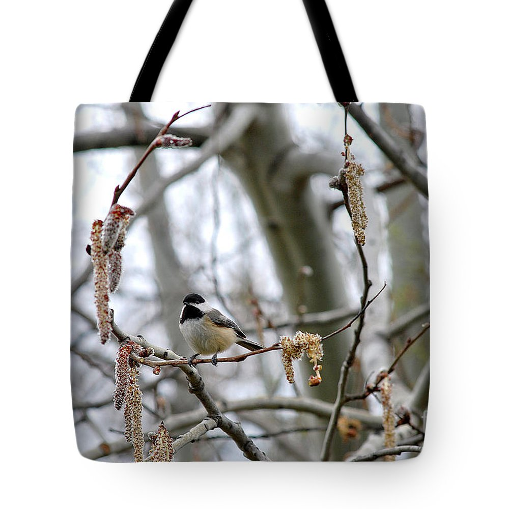 Beautiful Tote Bag featuring the photograph Black-capped Chickadee 20120321_39b by Tina Hopkins