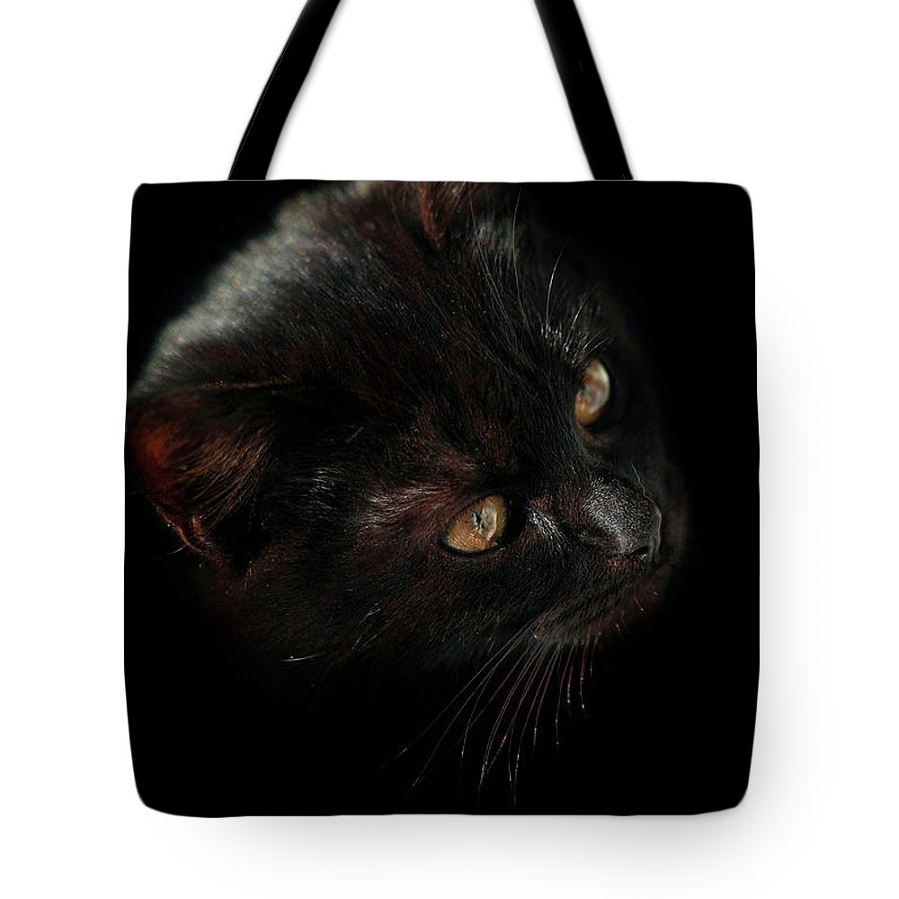 Cat Tote Bag featuring the photograph Black Cat by Olena Ivanova