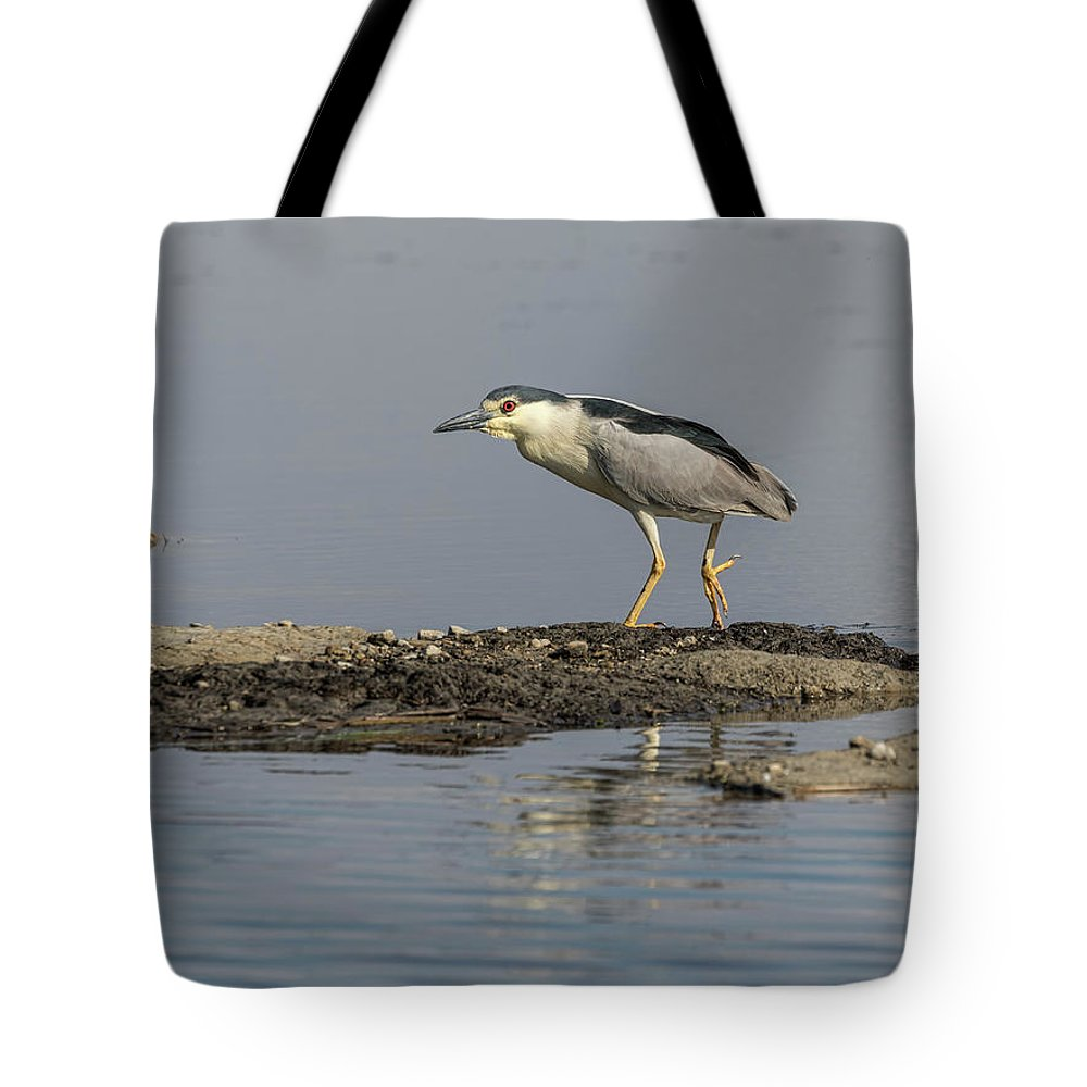 Black-crowned Night Heron Tote Bag featuring the photograph Black-crowned Night Heron 2017-2 by Thomas Young