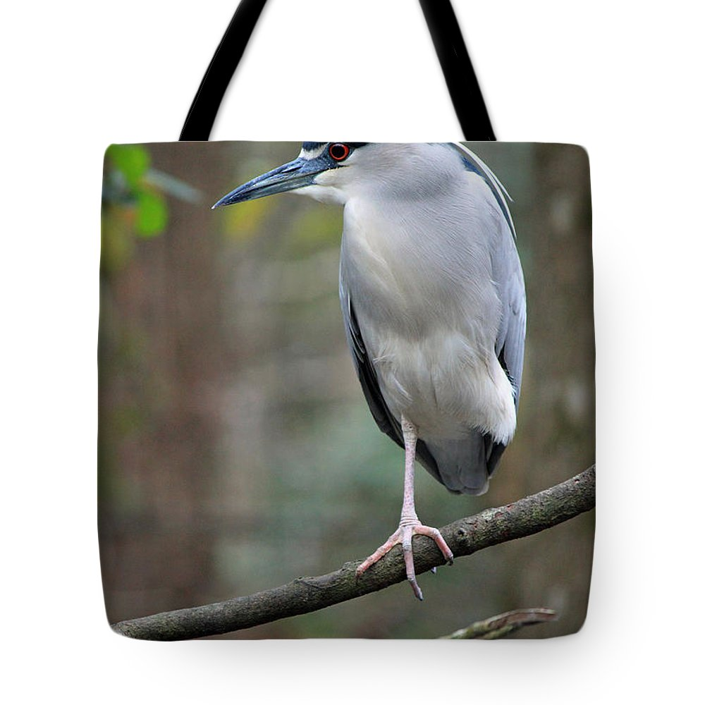 Black Crowned Night Heron Tote Bag featuring the photograph Black Crowned Night Heron IIi by Suzanne Gaff