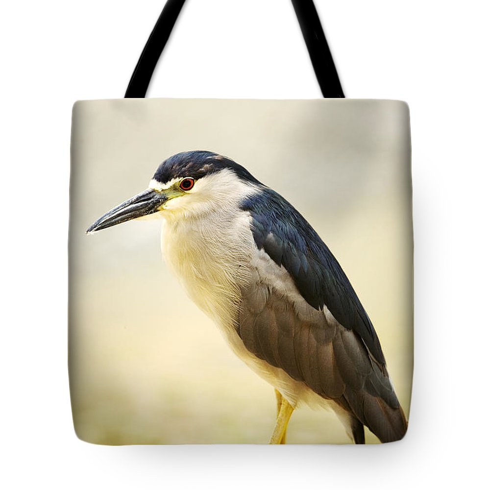 Animal Art Tote Bag featuring the photograph Black Crowned Night Heron by Ron Dahlquist - Printscapes