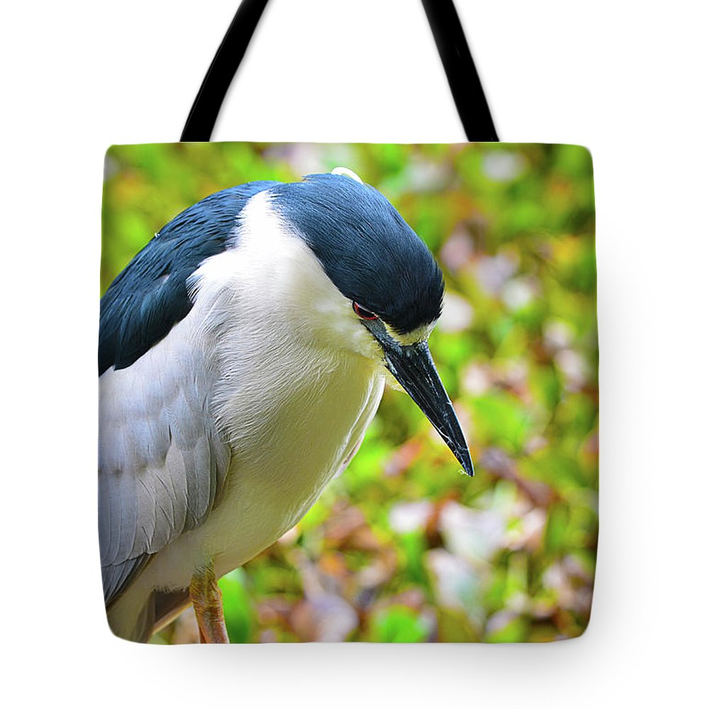 Bird Tote Bag featuring the photograph Black-crowned Night Heron by Spade Photo