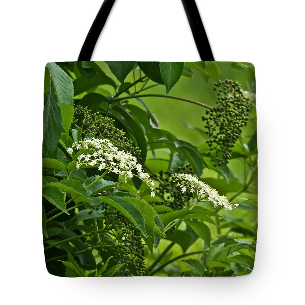 Elderberry Tote Bag featuring the photograph Black Elderberry - Sambucus Nigra_0261black Elderberry - Sambucus Nigra by Mother Nature
