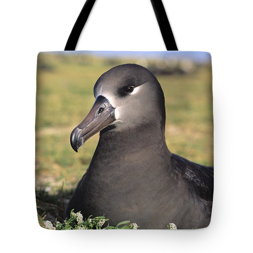 Albatross Tote Bag featuring the photograph Black Footed Albatross by Reggie David - Printscapes