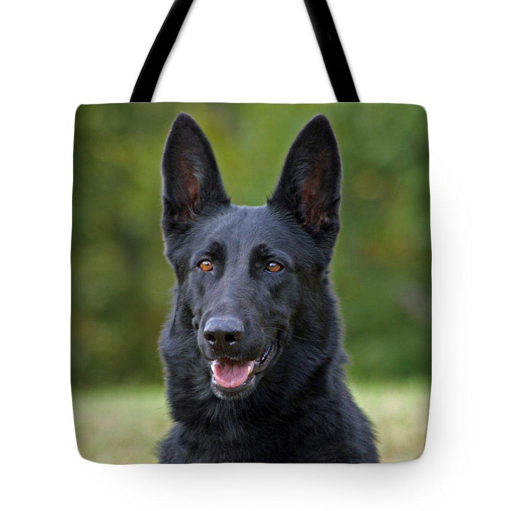 German Shepherd Tote Bag featuring the photograph Black German Shepherd Dog by Sandy Keeton
