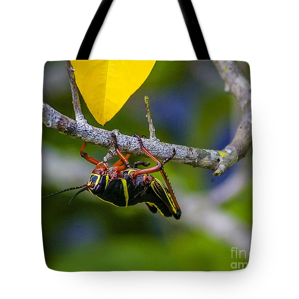 Grasshopper Tote Bag featuring the photograph Black Grasshopper by Nancy L Marshall