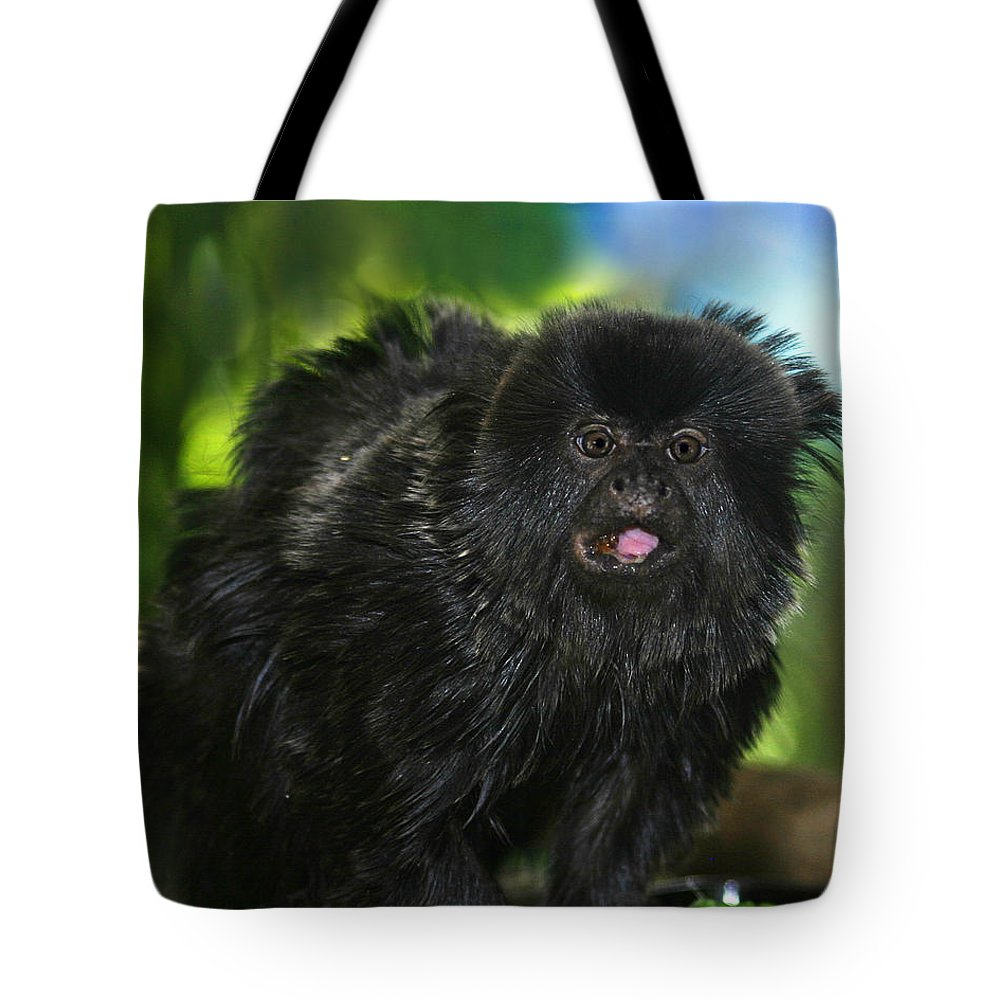 Wildlife Tote Bag featuring the photograph Black Marmoset by Anthony Jones