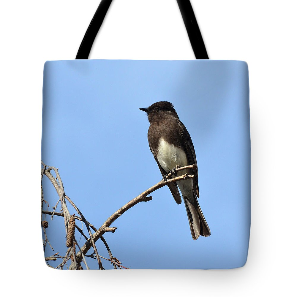 Phoebe Tote Bag featuring the photograph Black Phoebe 2 by David Hohmann