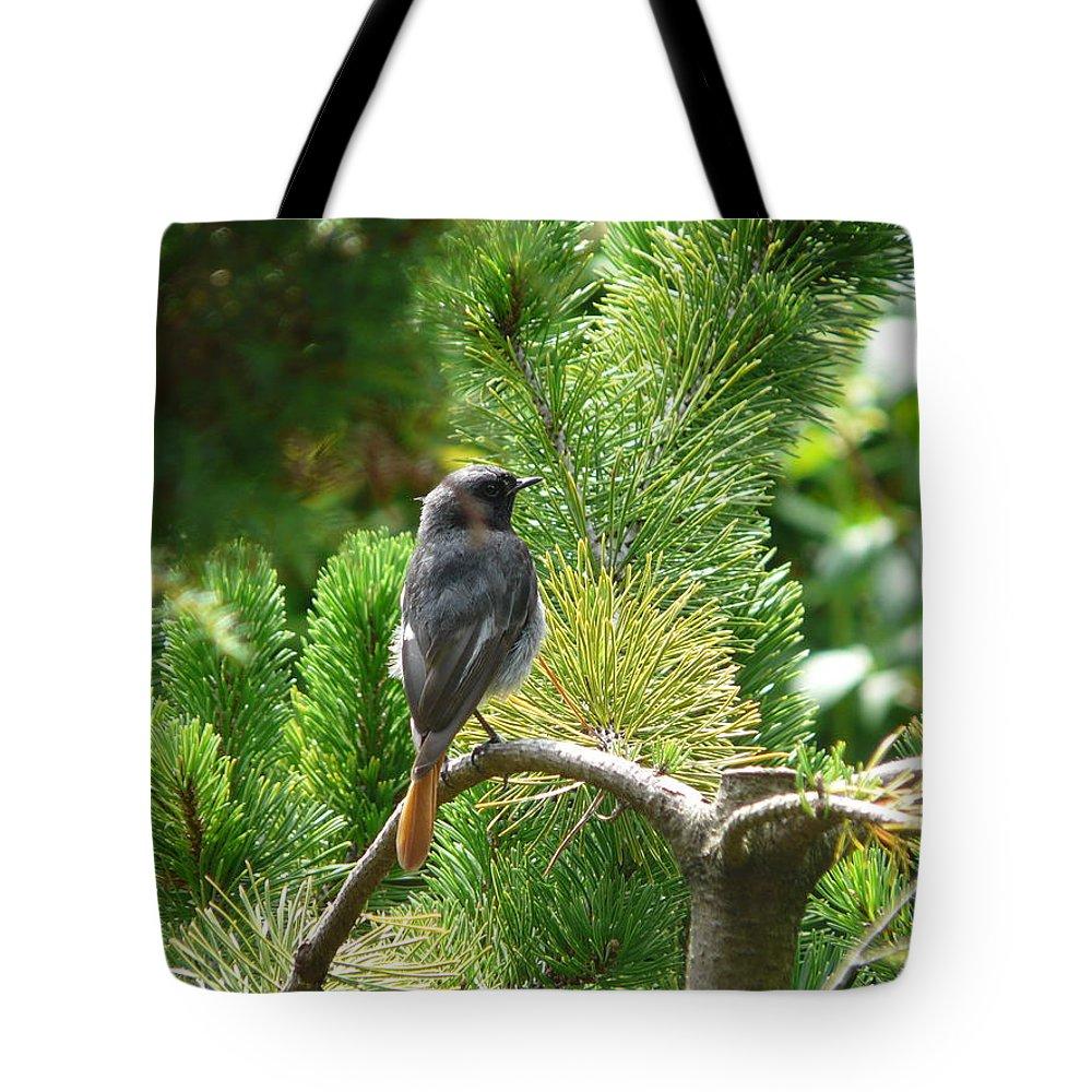 Bird Tote Bag featuring the photograph Black Redstart by Valerie Ornstein