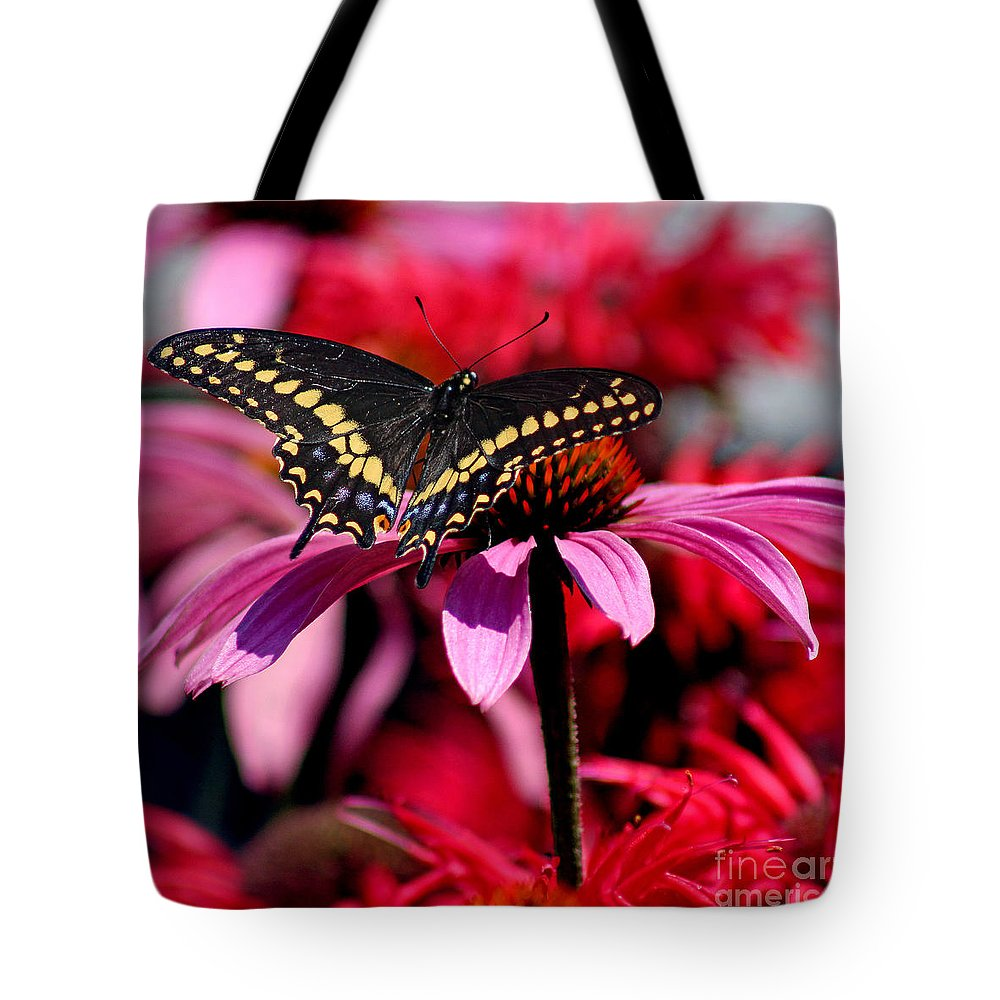 Insect Tote Bag featuring the photograph Black Swallowtail Butterfly On Coneflower Square by Karen Adams