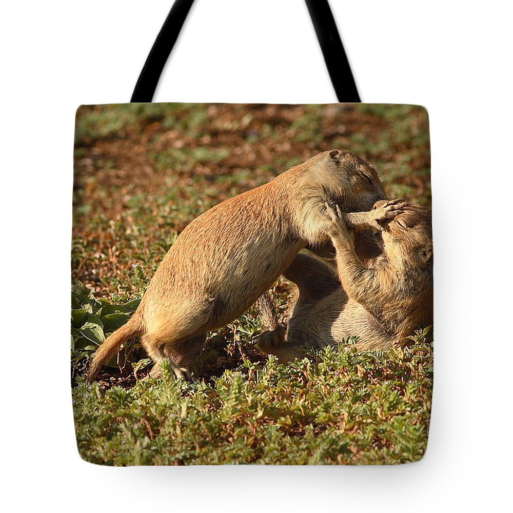 Prairie Dog Tote Bag featuring the photograph Black-tailed Prairie Dogs Wrestling Around by Max Allen