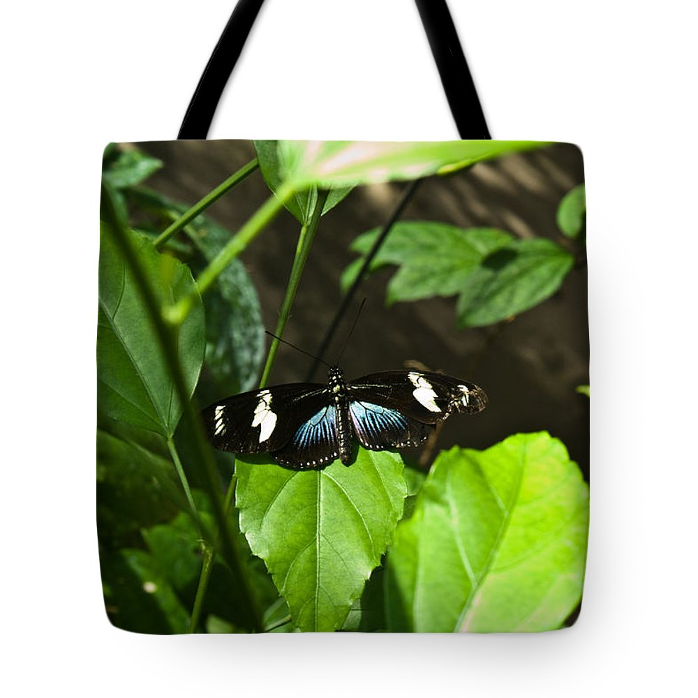 Black Tote Bag featuring the photograph Black Tropical Butterfly by Douglas Barnett