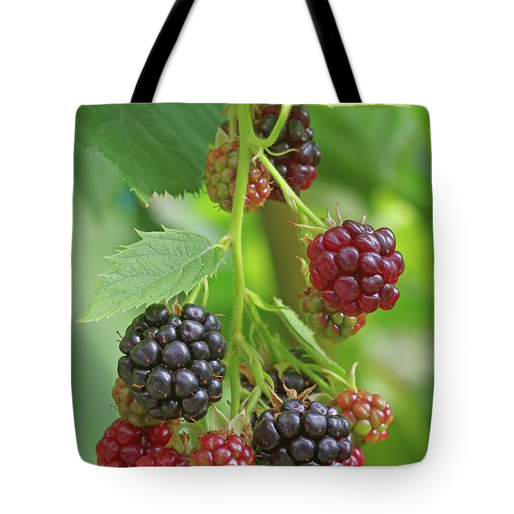 Healthy Tote Bag featuring the photograph Blackberry by Cosmin-Constantin Sava