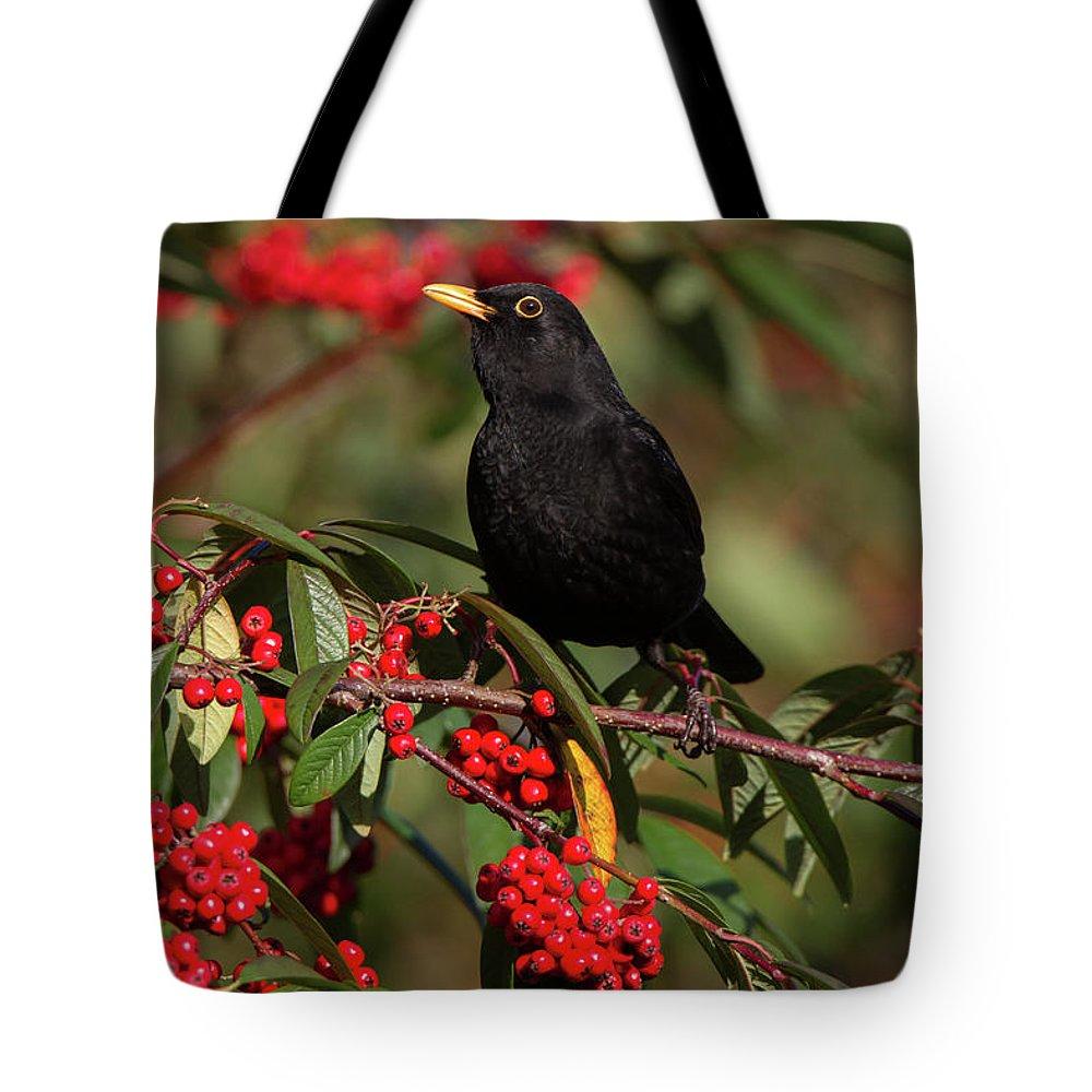 Blackbird Tote Bag featuring the photograph Blackbird Red Berries by Peter Walkden