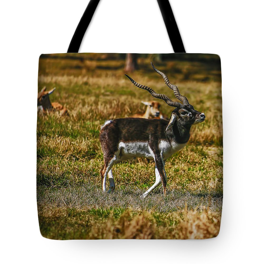 Florida Tote Bag featuring the photograph Blackbuck by Mark Fuge