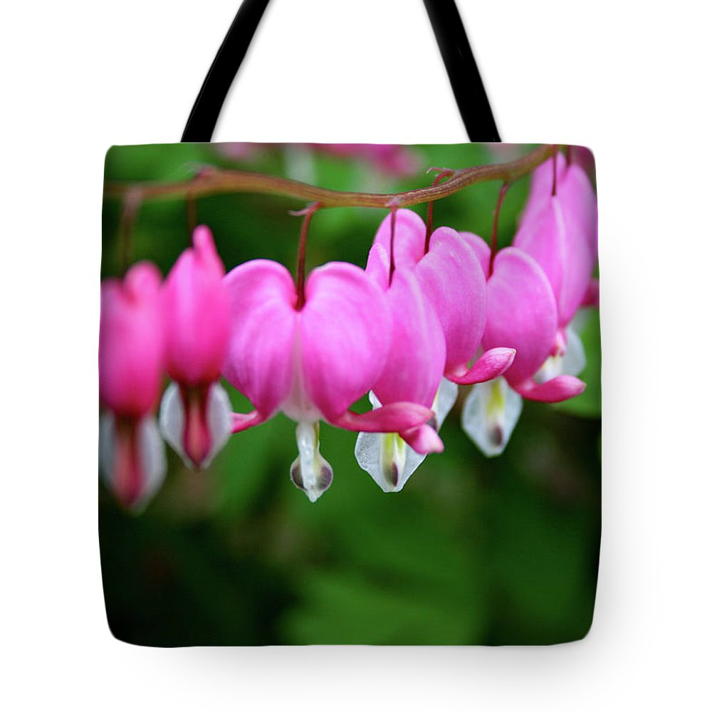 Flowers Tote Bag featuring the photograph Bleeding Hearts by Matt Sexton