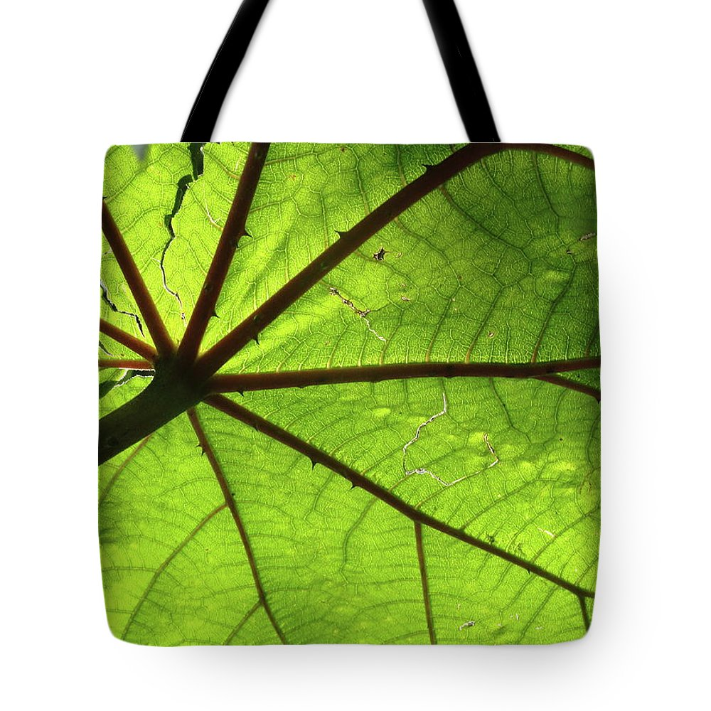 Leaves Tote Bag featuring the photograph Blood Red Feeder by Trish Hale