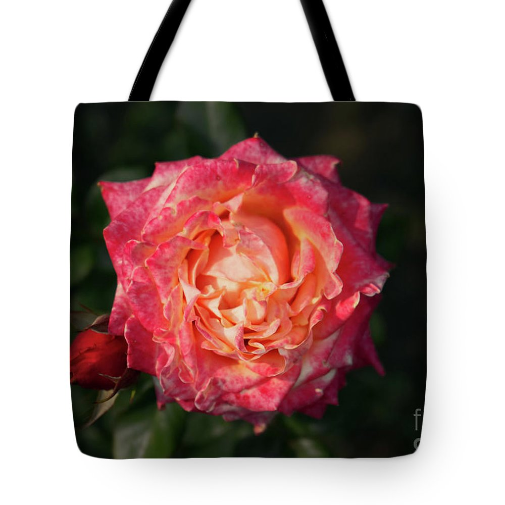 Rose Tote Bag featuring the photograph Blossoming Rose by Juuso Viitanen