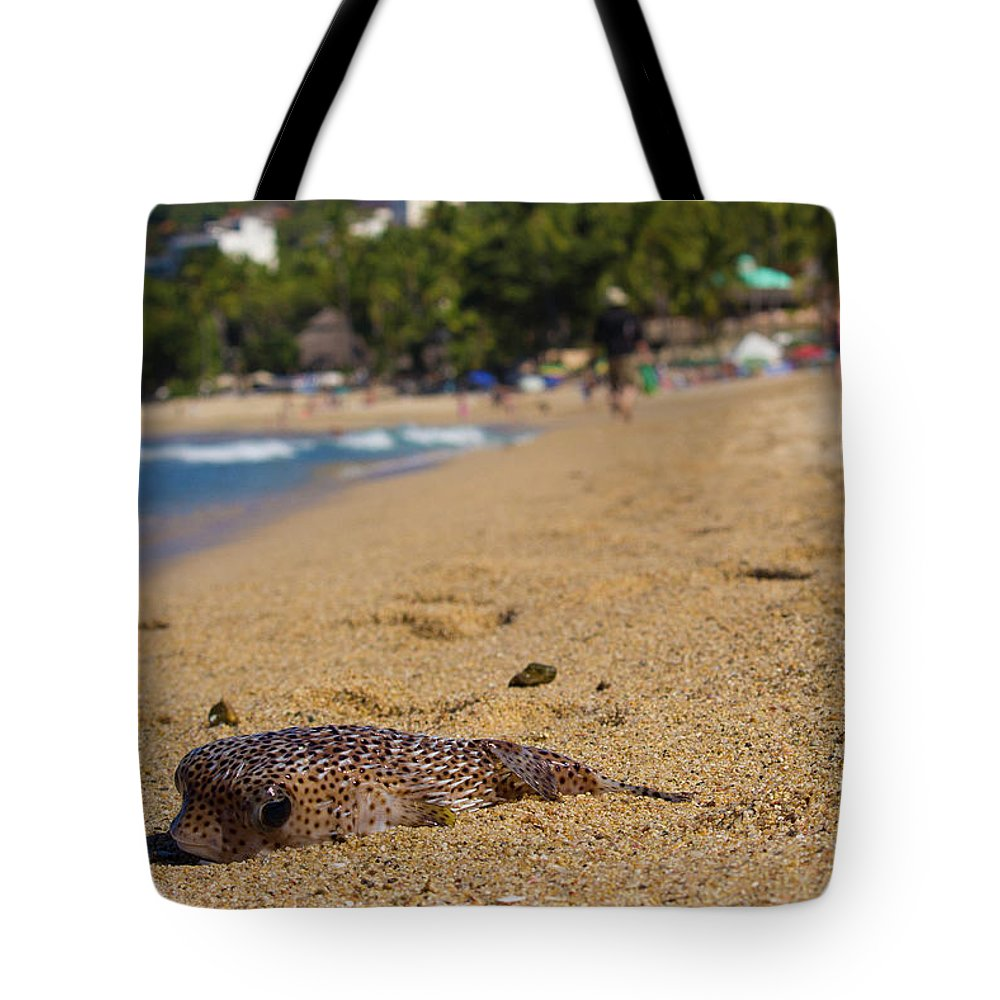 Blowfish Tote Bag featuring the photograph Blowfish Offshore by Seb Estrada