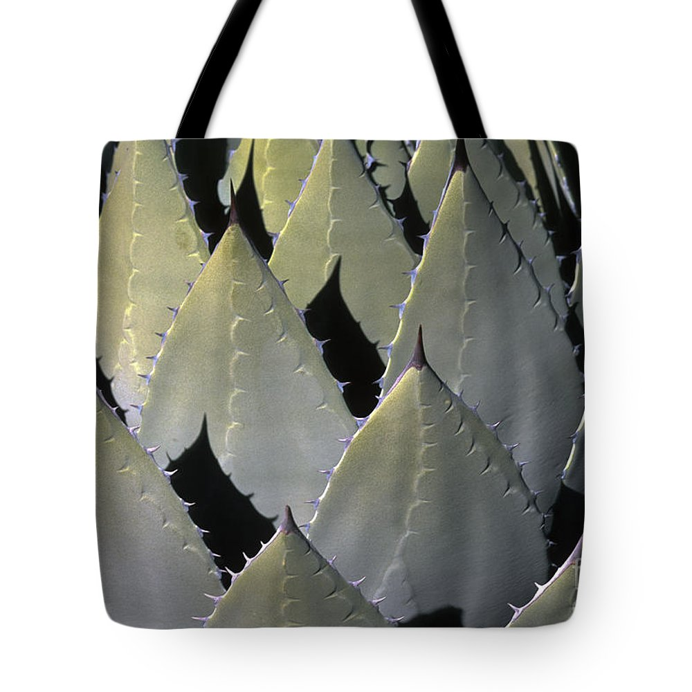 Cactus Tote Bag featuring the photograph Blue Agave Cactus by Sandra Bronstein