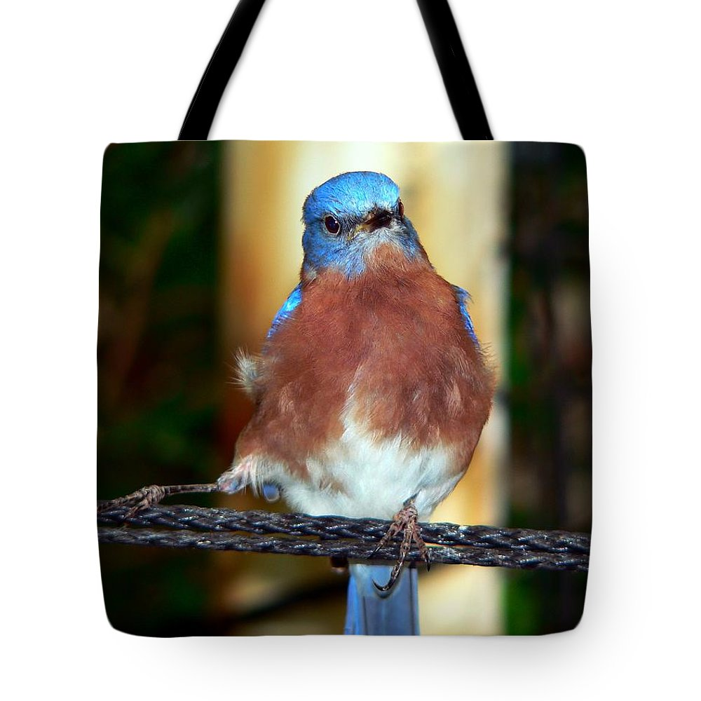 Tanager Tote Bag featuring the photograph Blue And Brown Tanager by RiaL Treasures