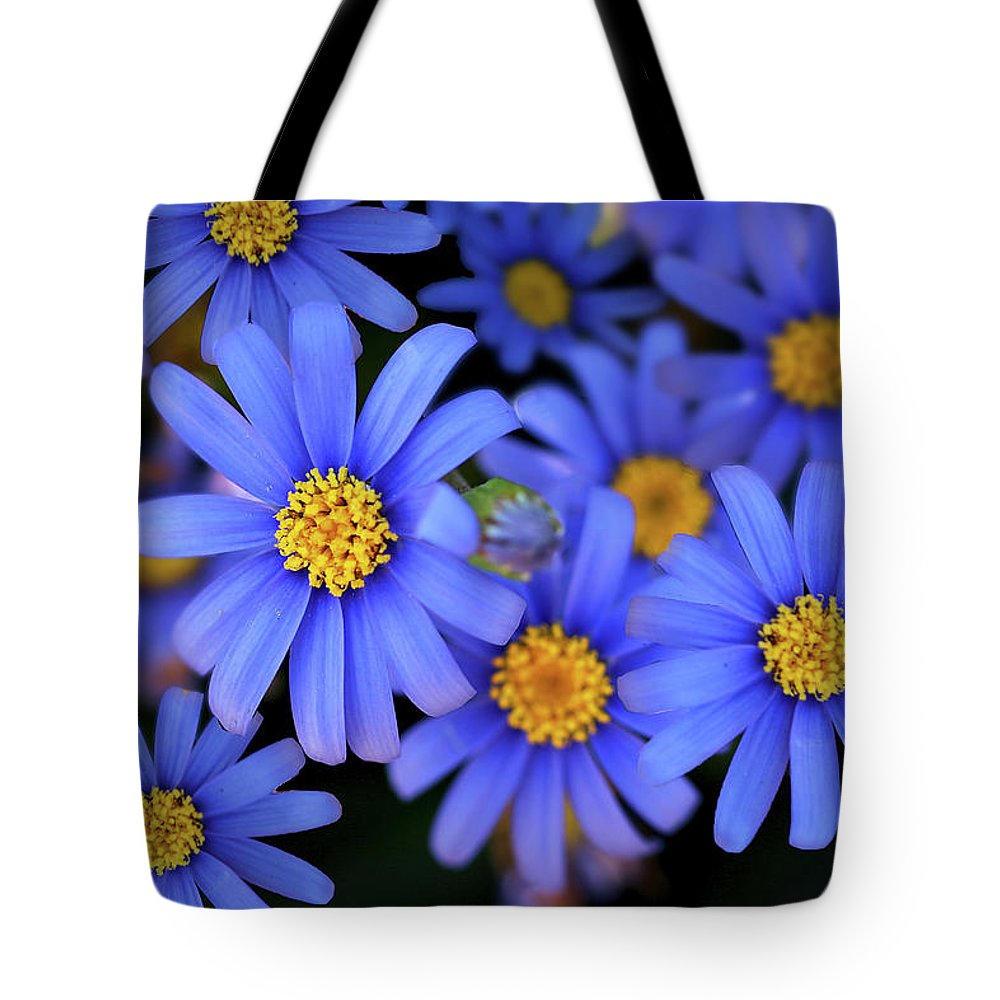 Asters Tote Bag featuring the photograph Blue Asters by Vanessa Thomas