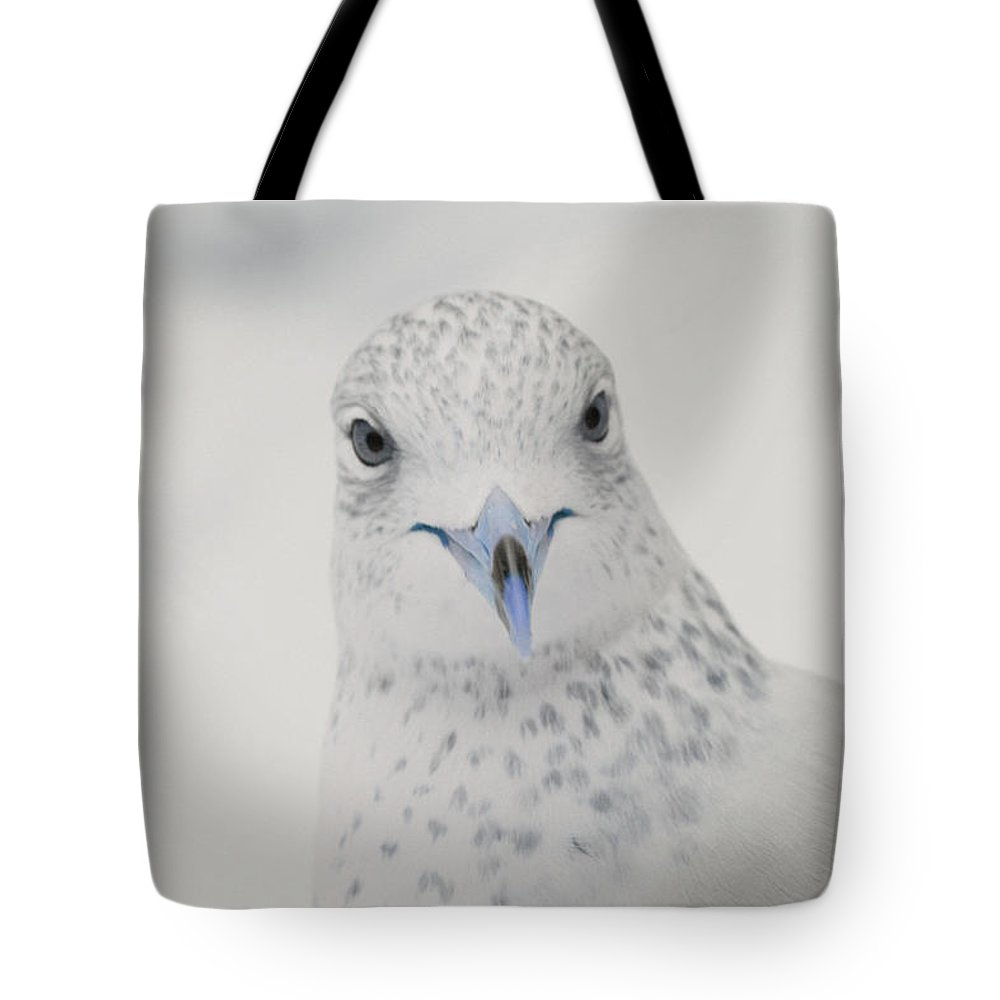 Seagull Tote Bag featuring the photograph Blue Beak by Karol Livote