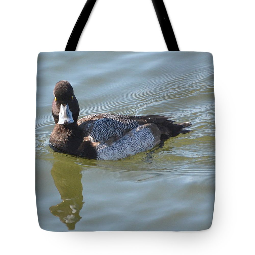 Scaup Tote Bag featuring the photograph Blue Bill by Dan Williams