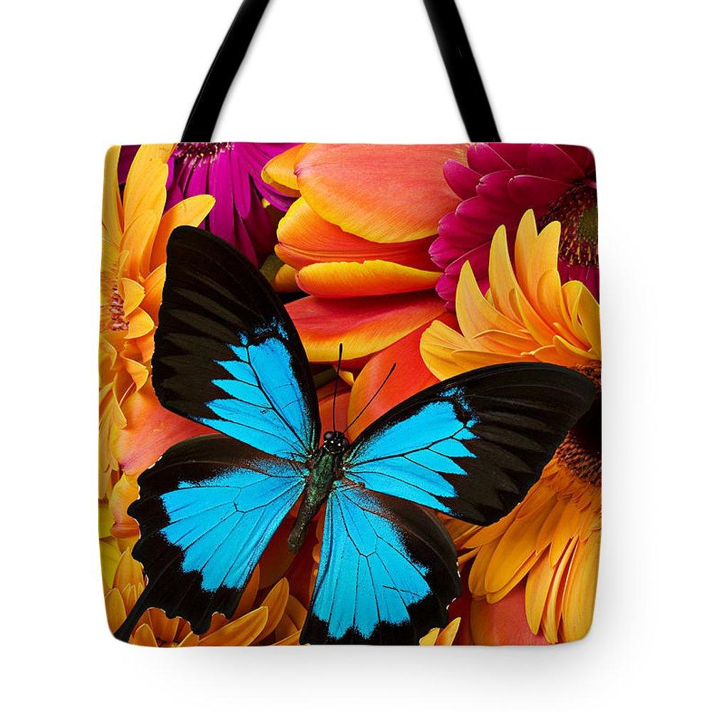 Butterfly Tulips Daisy�s Tote Bag featuring the photograph Blue Butterfly On Brightly Colored Flowers by Garry Gay