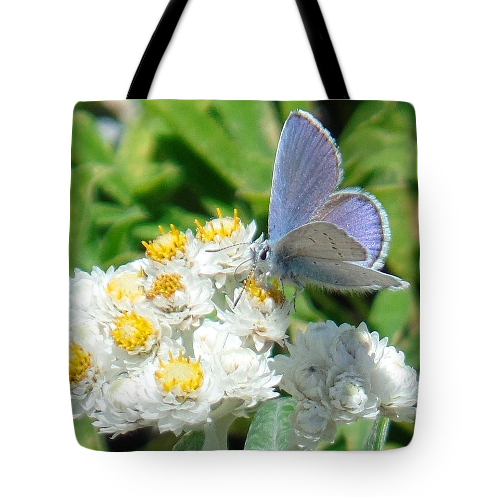 Blue Tote Bag featuring the photograph Blue Butterfly On White Flowers by Karen Molenaar Terrell