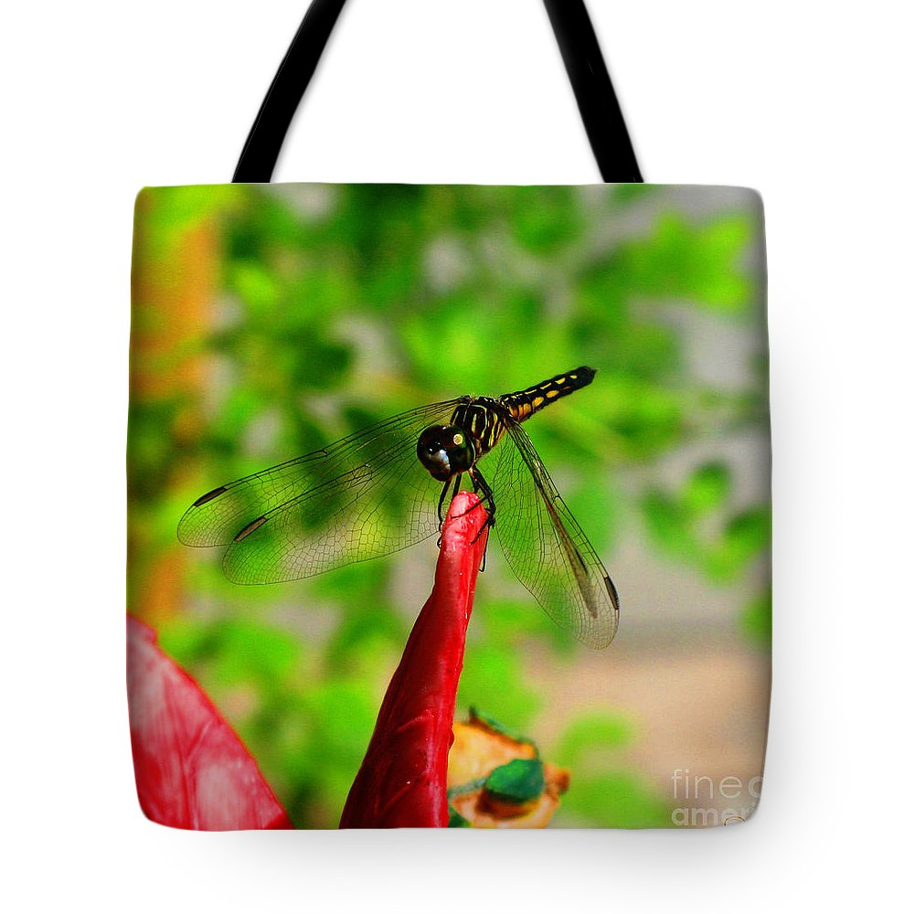 Damselfly Tote Bag featuring the photograph Blue Dasher Damselfly by September Stone