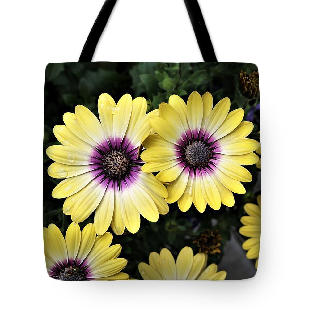Blue-eyed Beauty Tote Bag featuring the photograph Blue Eyed Beauty African Daisy by David Rafuse Captured Images of Maine