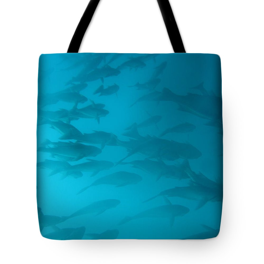 Underwater Tote Bag featuring the photograph Blue Flash by Chad Natti
