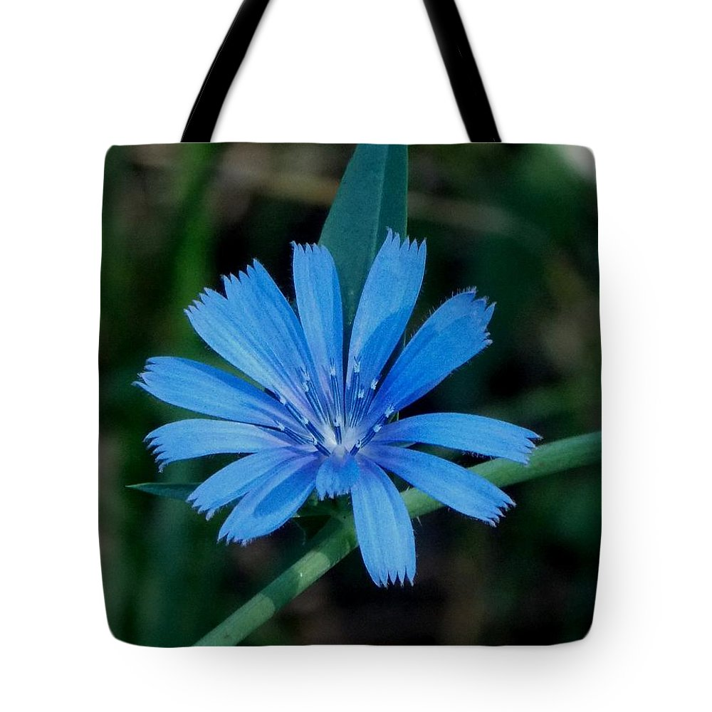 Blue Tote Bag featuring the photograph Blue Chicory Flower by Trinket's Legacy