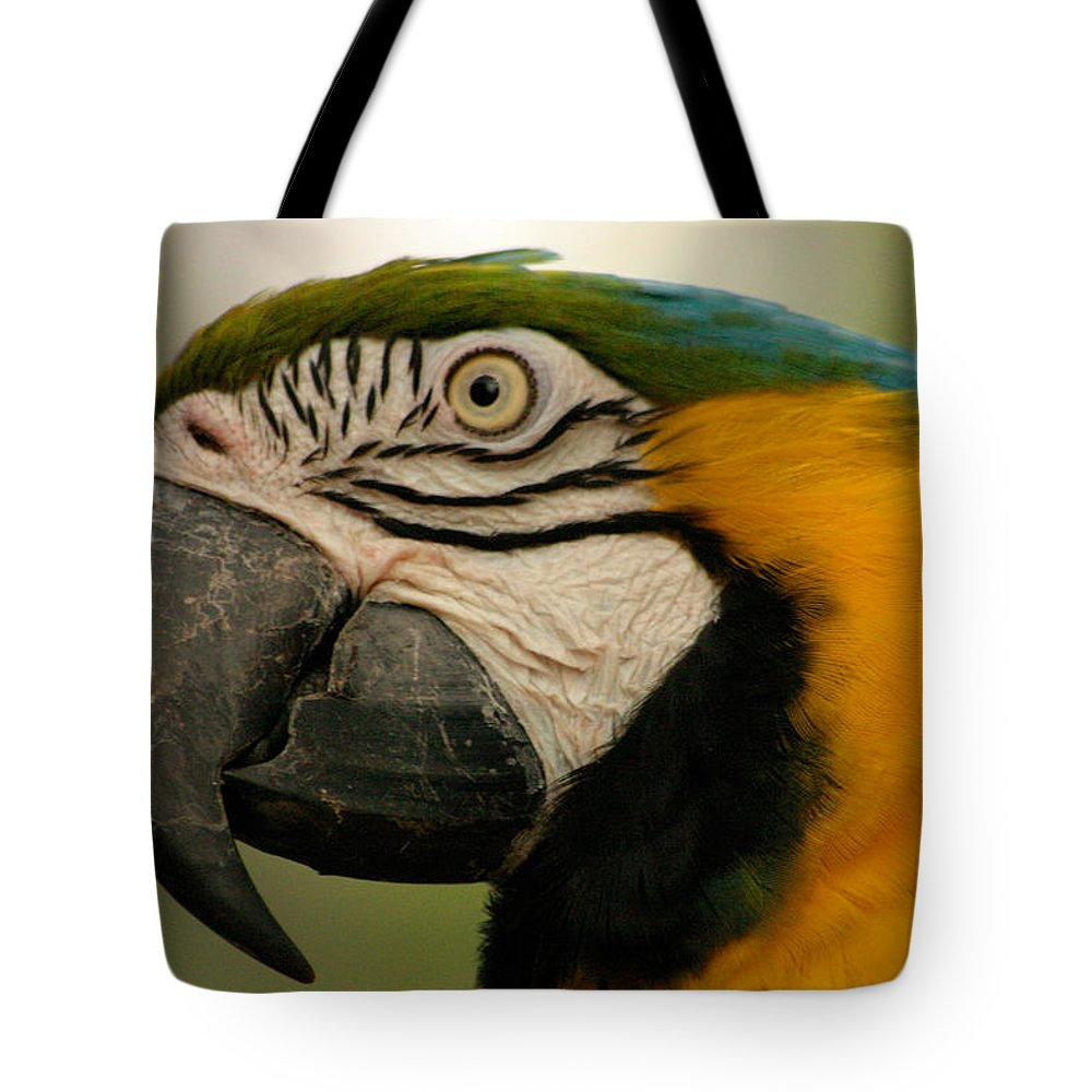 Parrot Tote Bag featuring the photograph Blue Gold Macaw South America by Ralph A Ledergerber-Photography