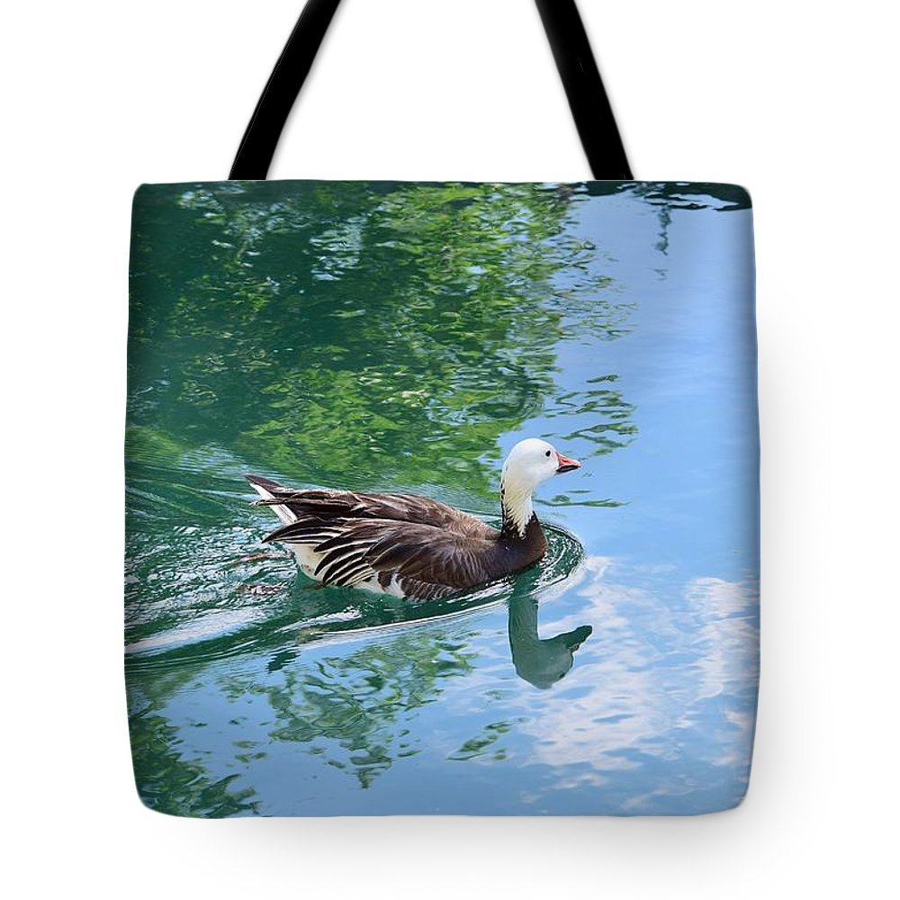 Bird Tote Bag featuring the photograph Blue Goose-1 by Floyd Kauffman