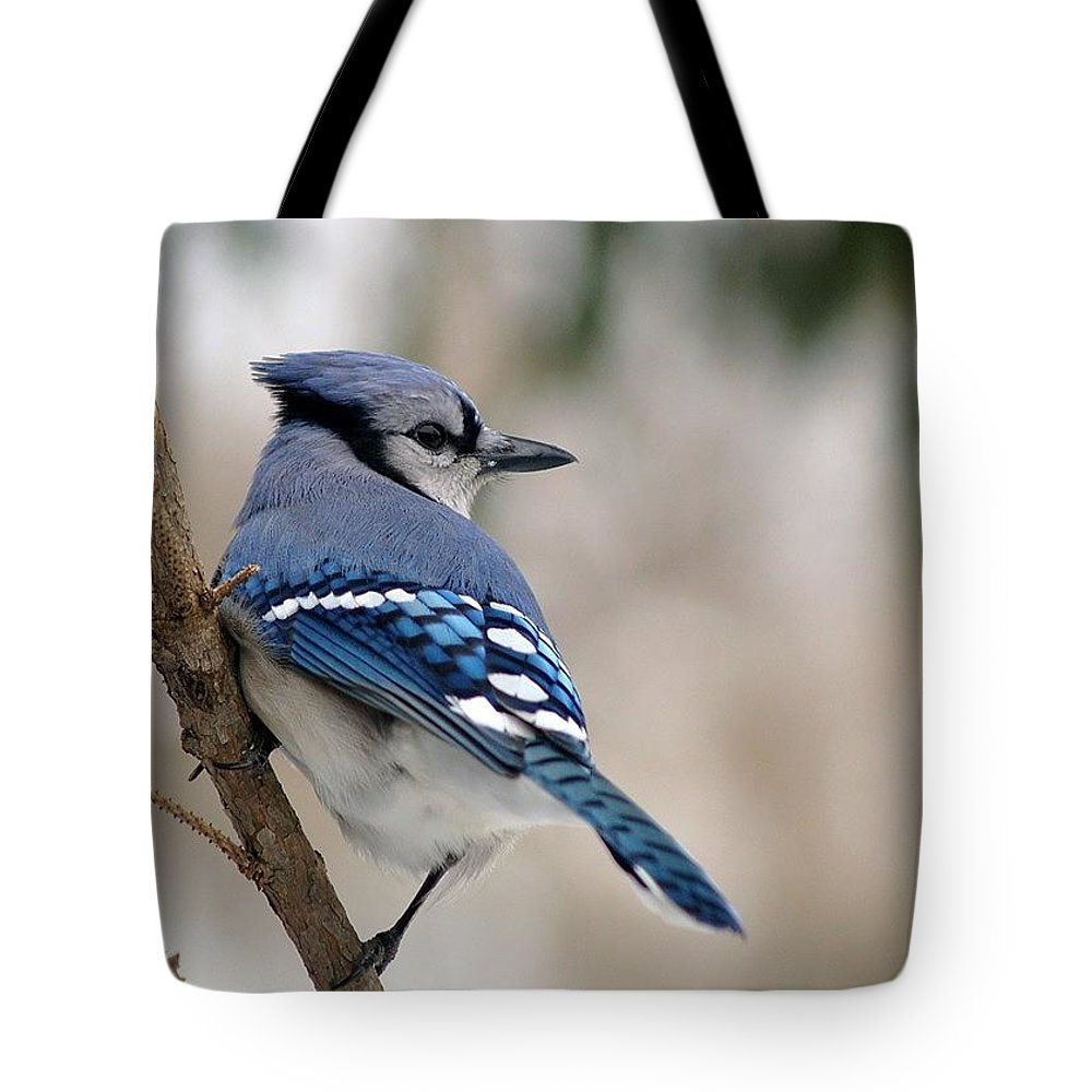 Blue Jay Tote Bag featuring the photograph Blue Jay by Gaby Swanson