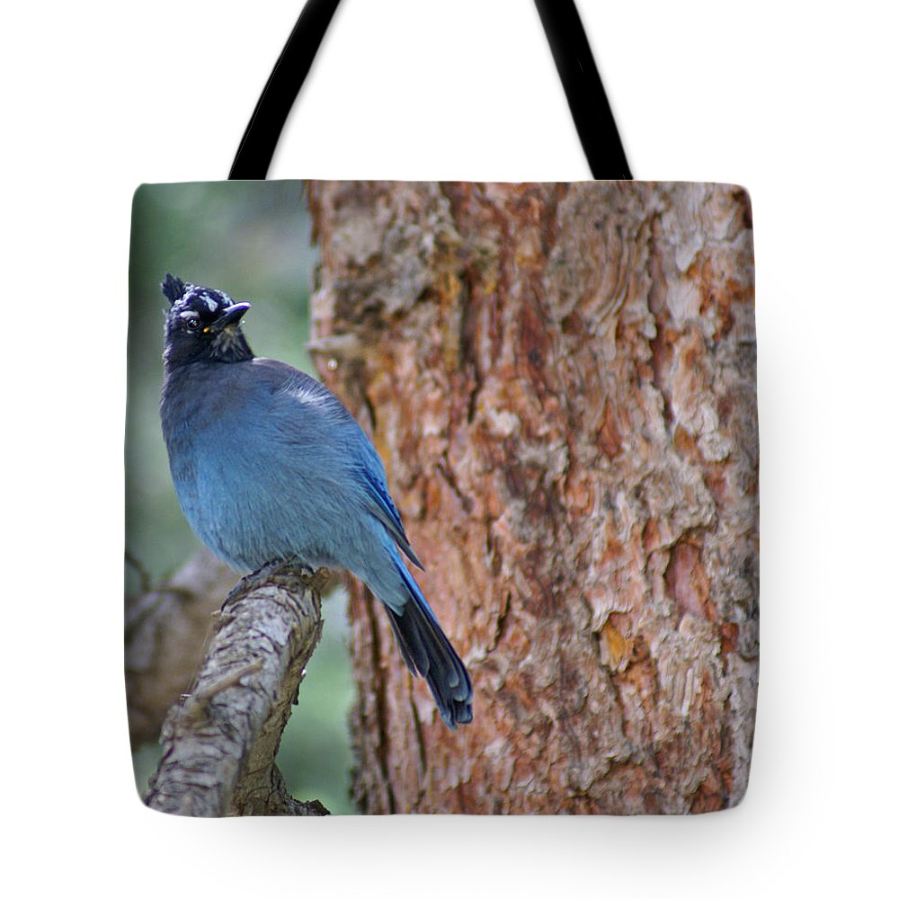 Blue Jay Tote Bag featuring the photograph Blue Jay by Heather Coen