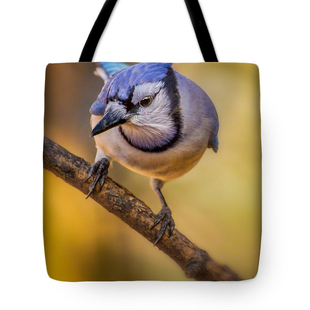 Animals Tote Bag featuring the photograph Blue Jay In Golden Light by Rikk Flohr