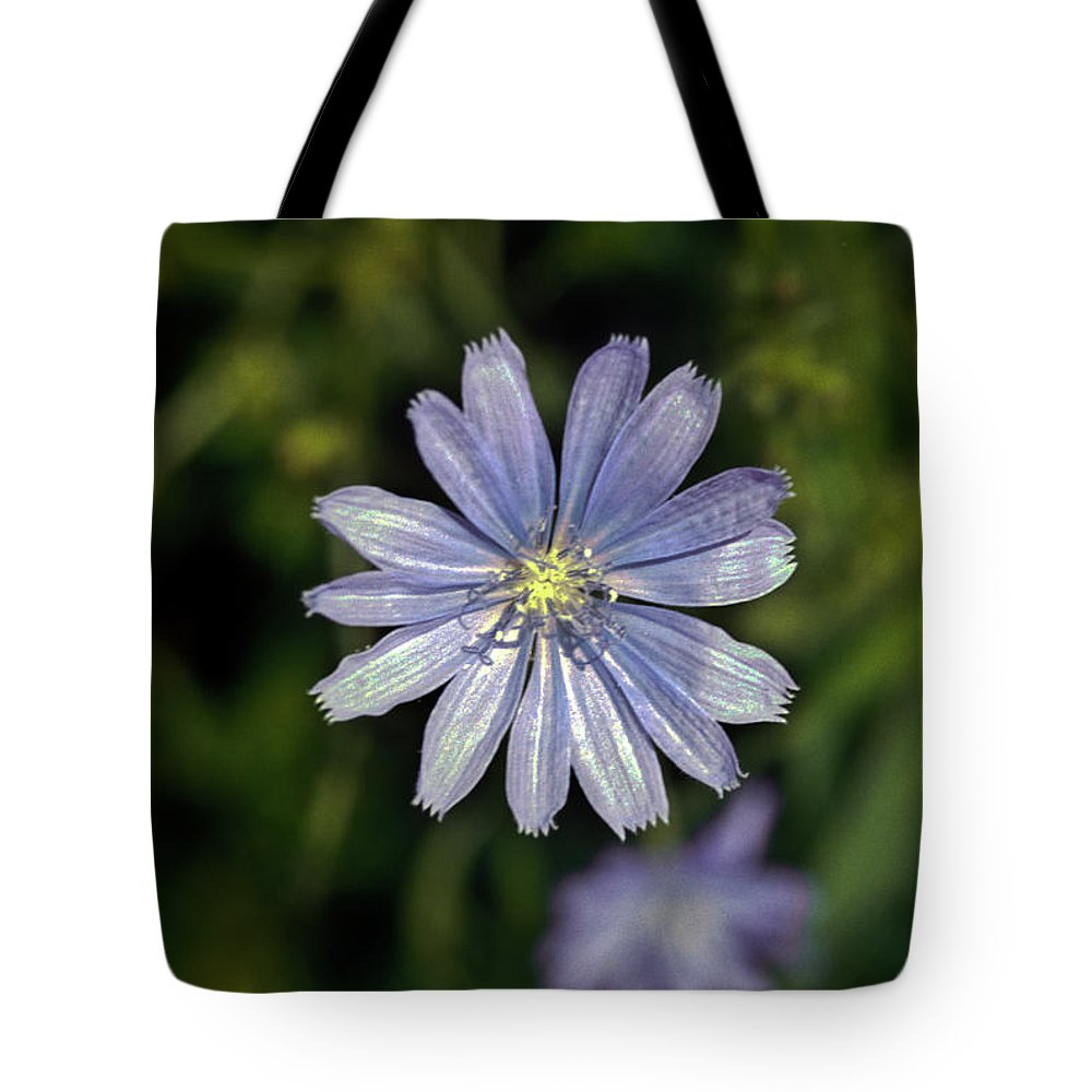 Chicory Tote Bag featuring the photograph Blue Sailors by Douglas Barnett