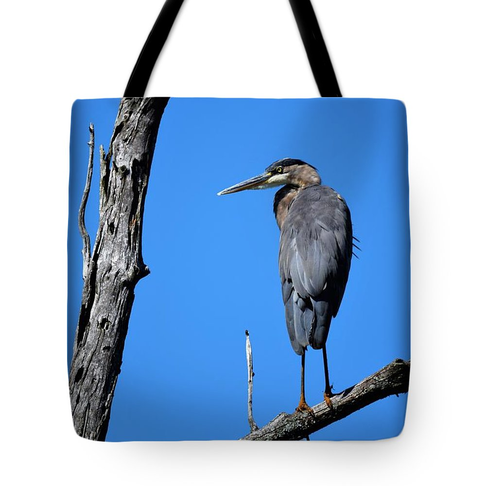 Bird Tote Bag featuring the photograph Blue by Tim Tanner