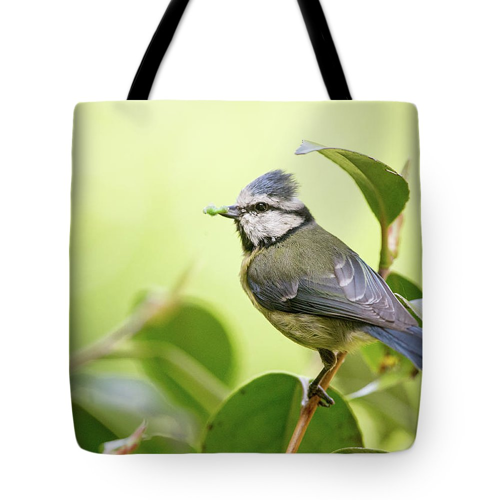 Blue Tit Tote Bag featuring the photograph Blue Tit With Caterpillar by Alan Grant