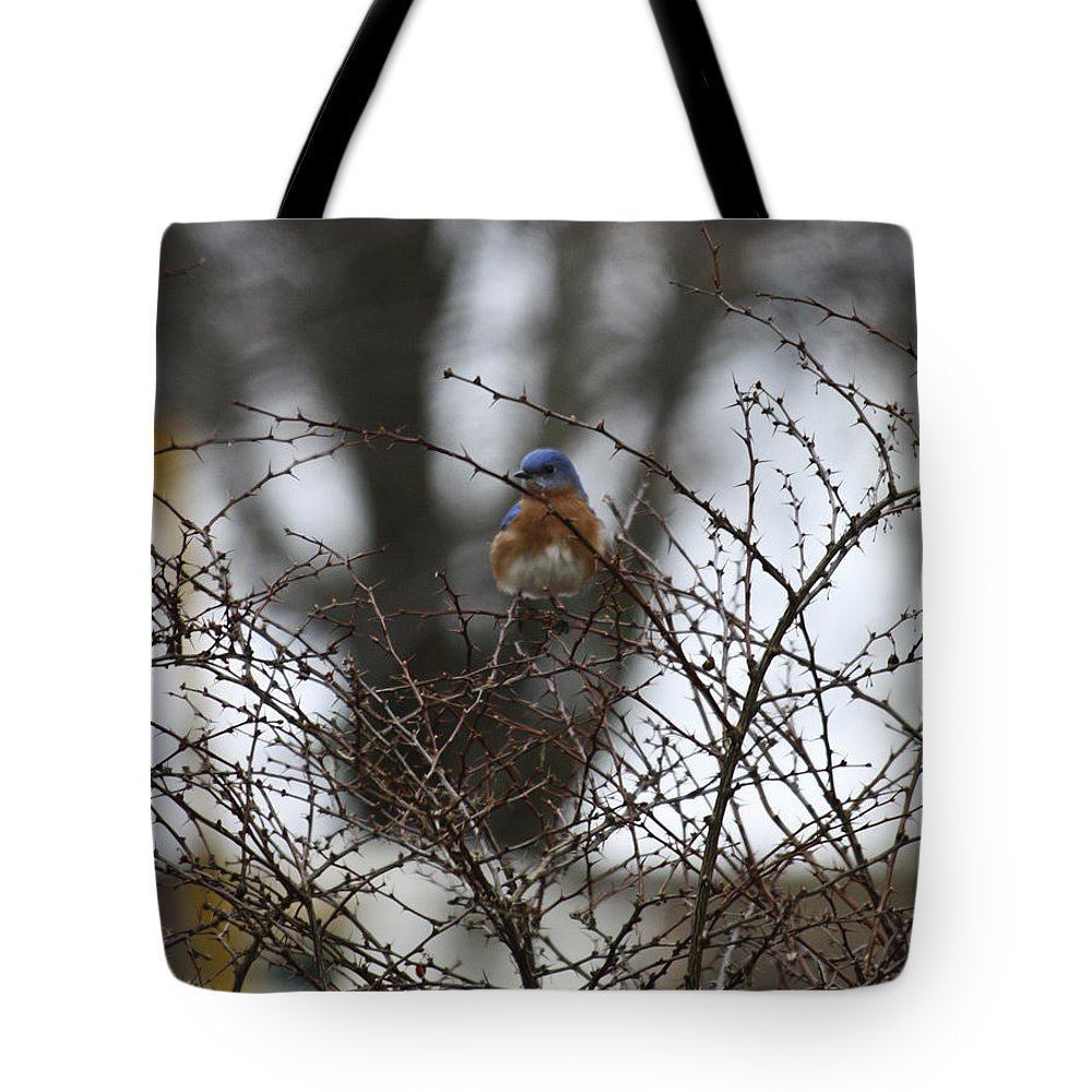 Eastern Tote Bag featuring the photograph Bluebird In Briars by Teresa Mucha