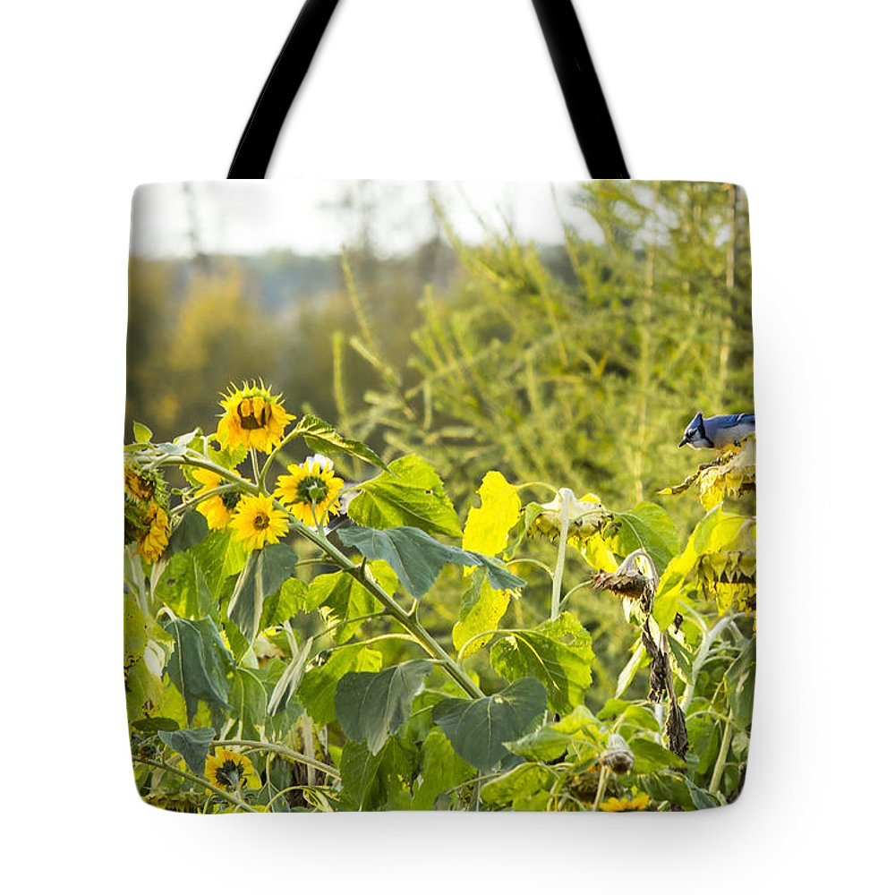 Cheerful Tote Bag featuring the photograph Bluejay And Sunflowers by Alanna DPhoto