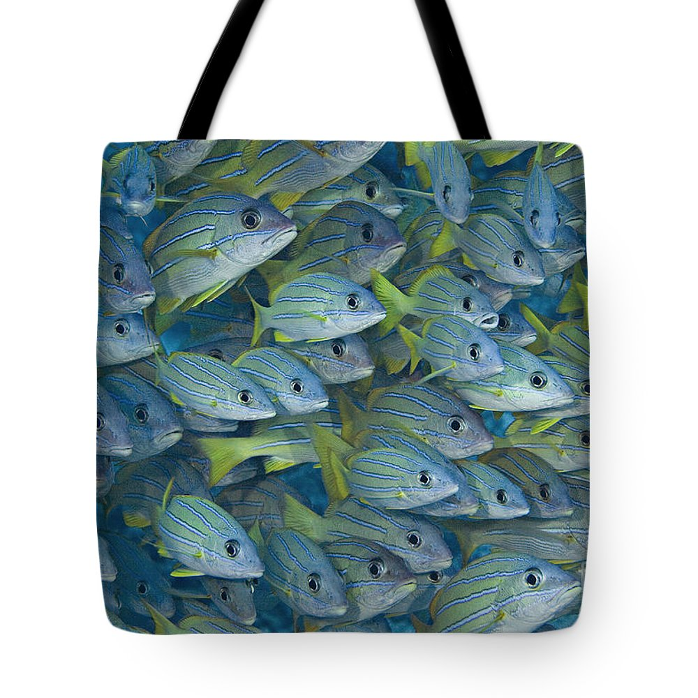 Animal Art Tote Bag featuring the photograph Bluestripe Snapper by Dave Fleetham - Printscapes