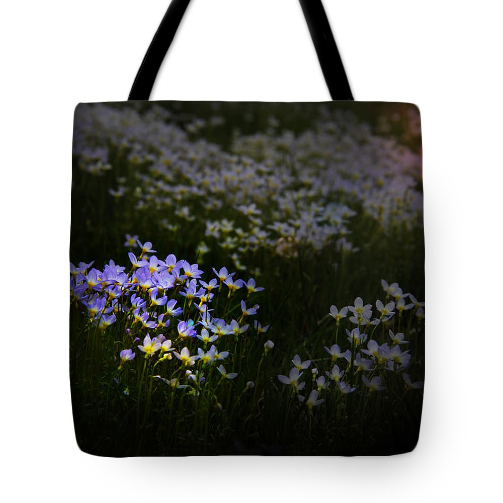 Bluets Tote Bag featuring the photograph Bluets In Momentary Light by John Meader