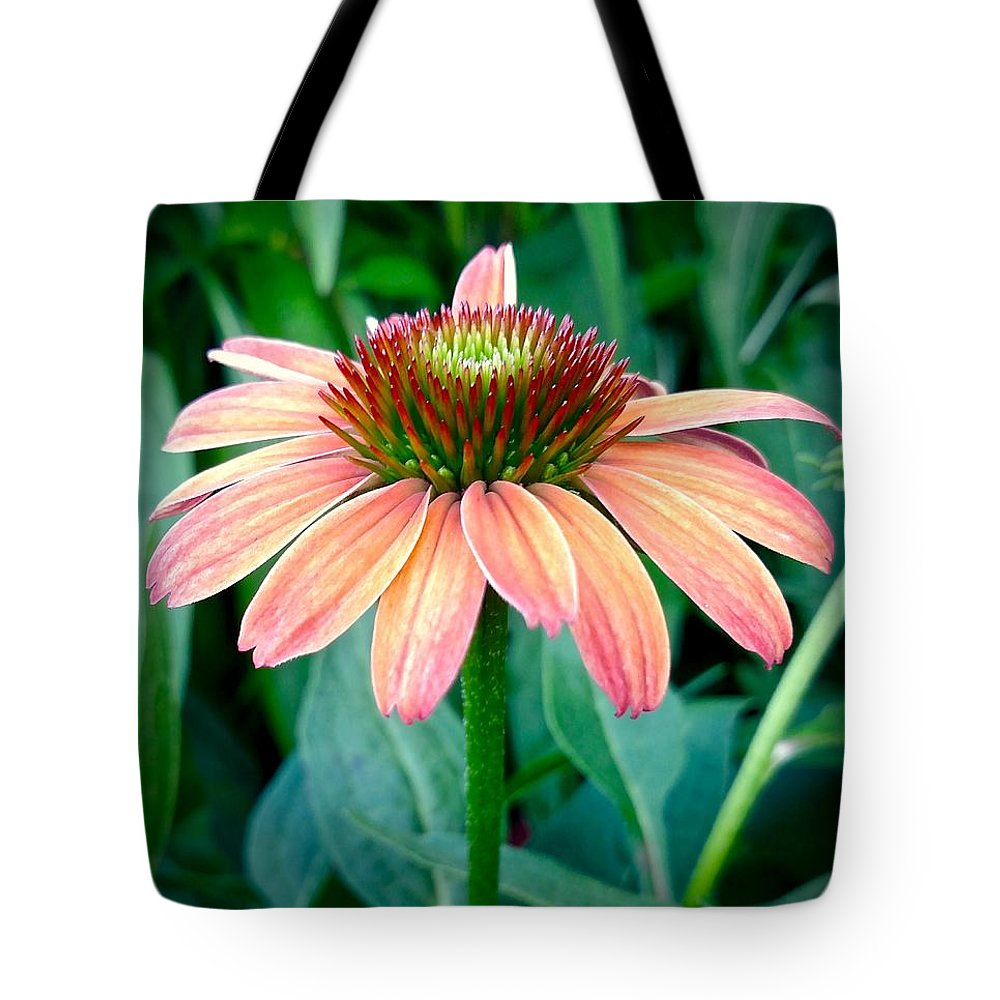 Coneflower Tote Bag featuring the photograph Blush Coneflower by Amanda Myers