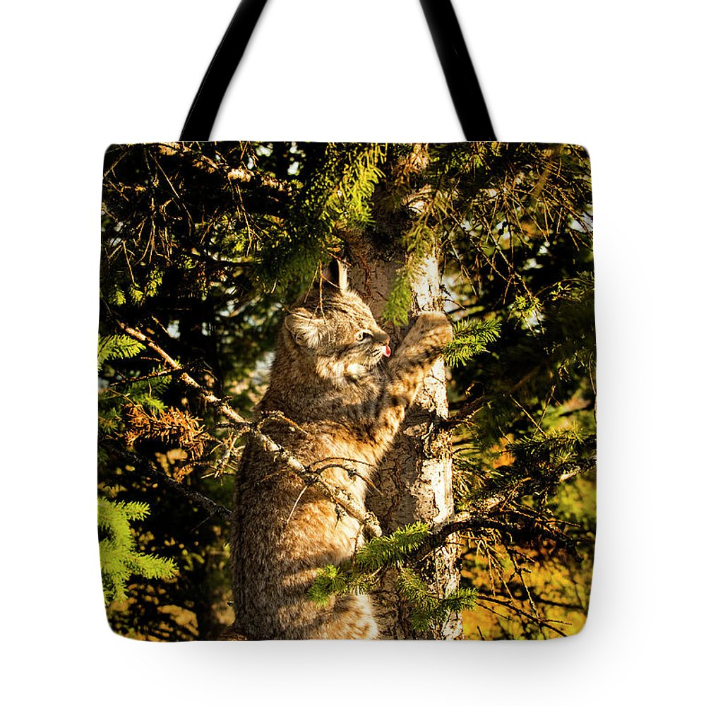 Bobcat Tote Bag featuring the photograph Bobcat up a tree by Roy Nierdieck