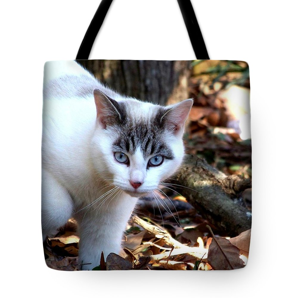 Cat Tote Bag featuring the photograph Boldly by Jai Johnson